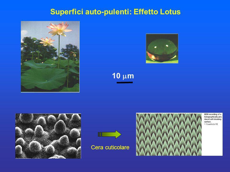 Superfici auto-pulenti: Effetto Lotus