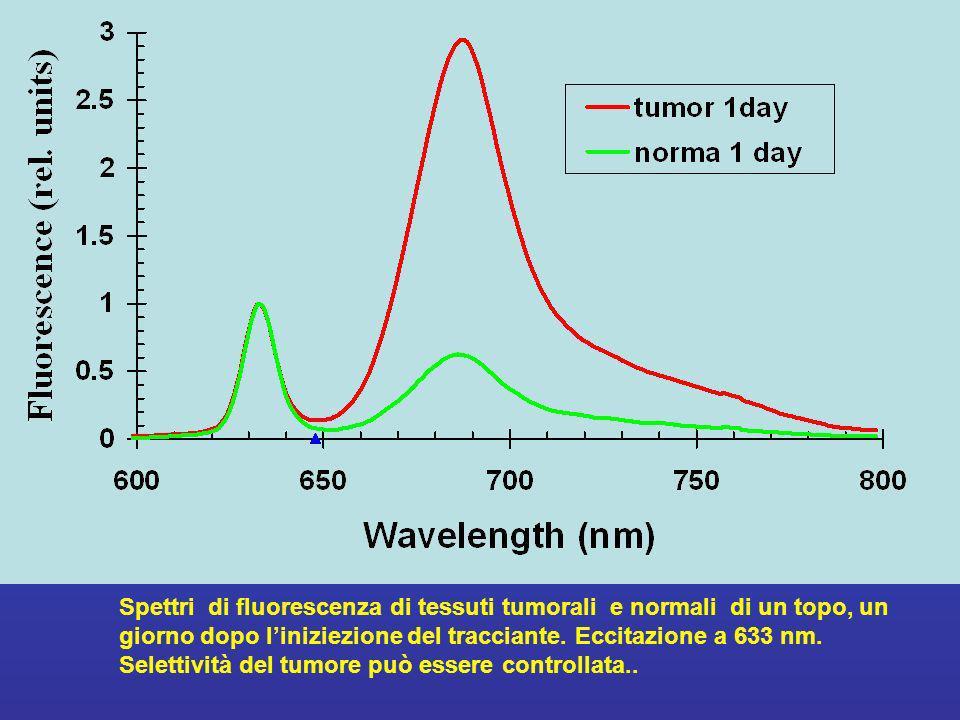 Spettri di fluorescenza di tessuti tumorali e normali di un topo, un giorno dopo l'iniziezione del tracciante. Eccitazione a 633 nm.