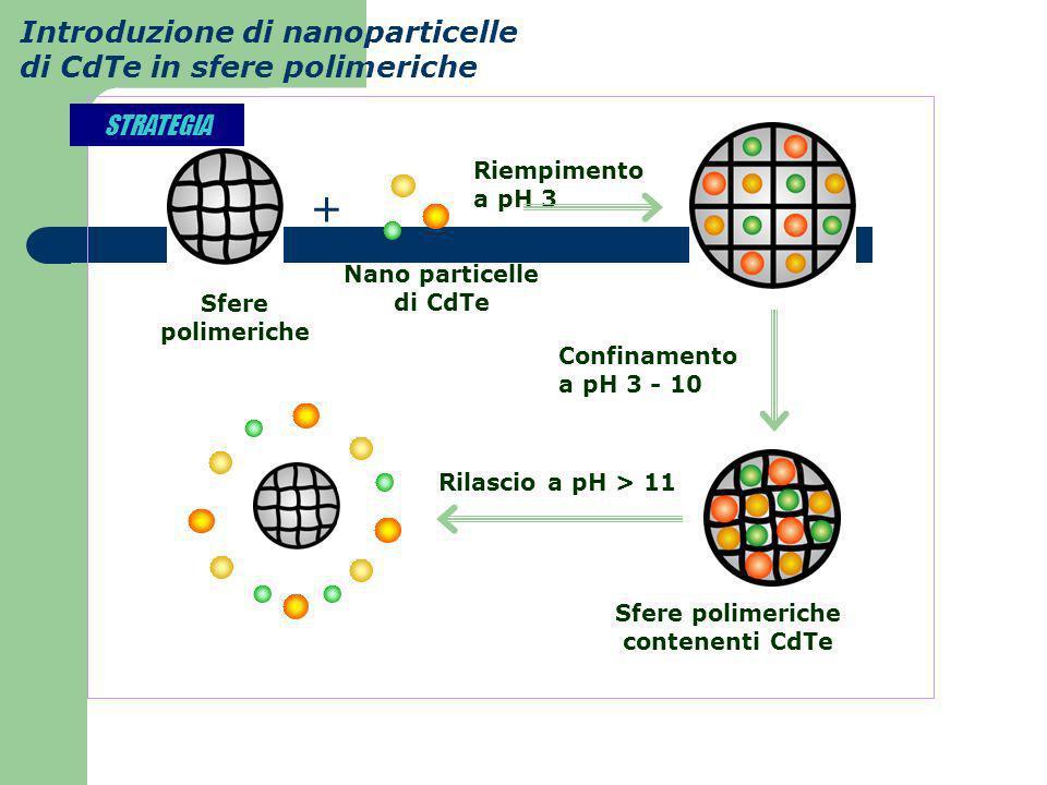 Nano particelle di CdTe Sfere polimeriche contenenti CdTe