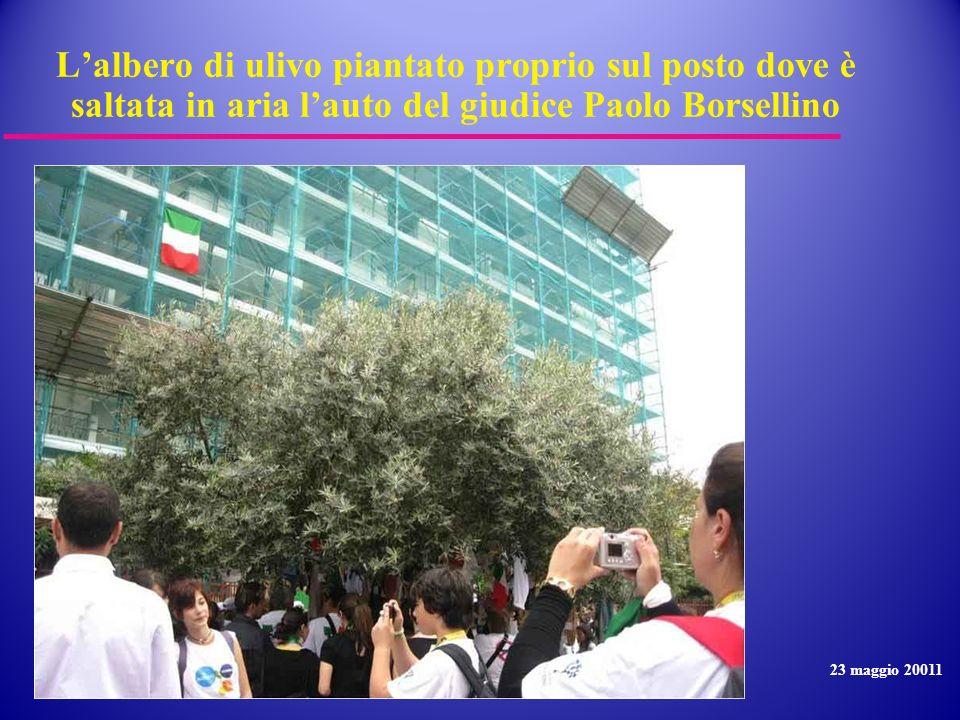 L'albero di ulivo piantato proprio sul posto dove è saltata in aria l'auto del giudice Paolo Borsellino