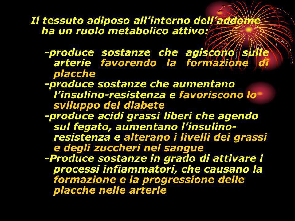 Il tessuto adiposo all'interno dell'addome ha un ruolo metabolico attivo: