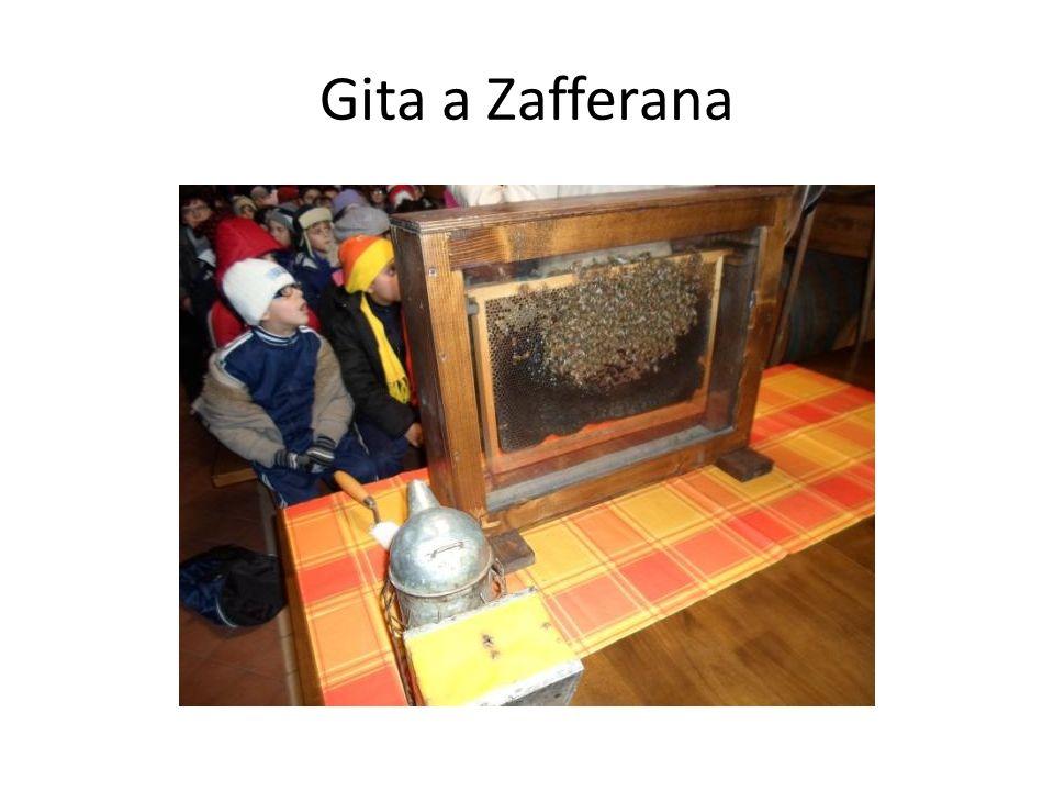 Gita a Zafferana VISITA GUIDATA A ZAFFERANA
