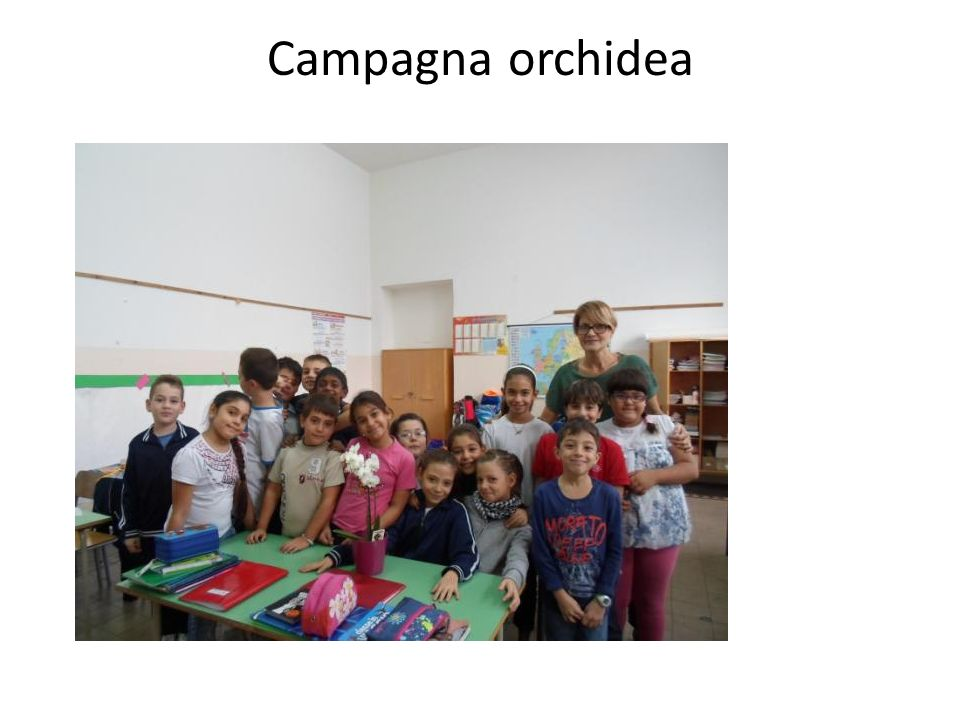 Campagna orchidea CAMPAGNA ORCHIDEA