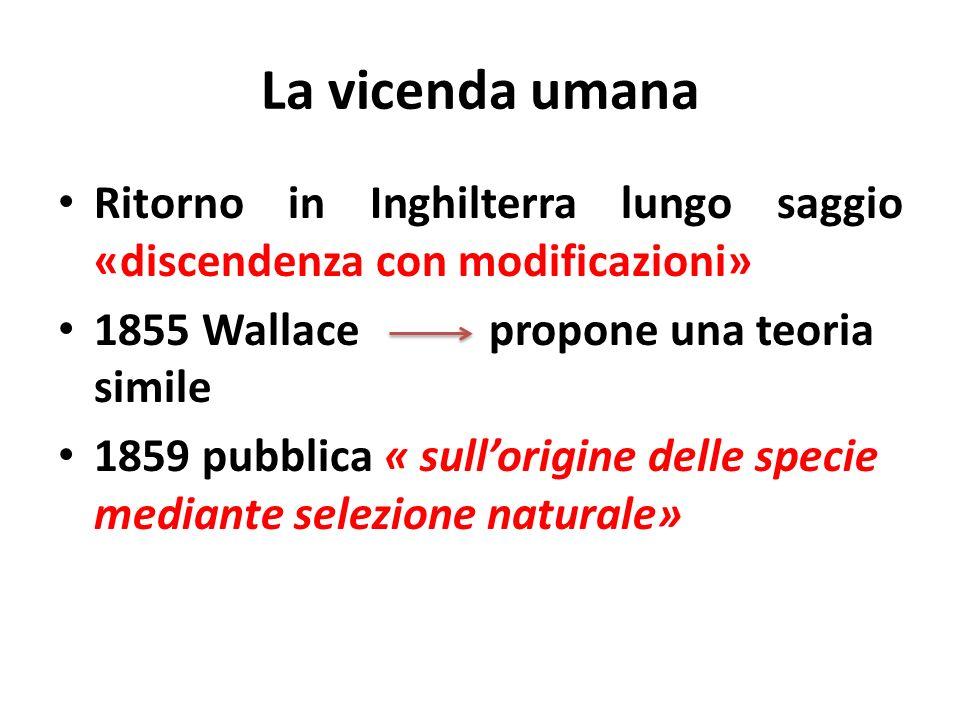 La vicenda umana Ritorno in Inghilterra lungo saggio «discendenza con modificazioni» 1855 Wallace propone una teoria simile.