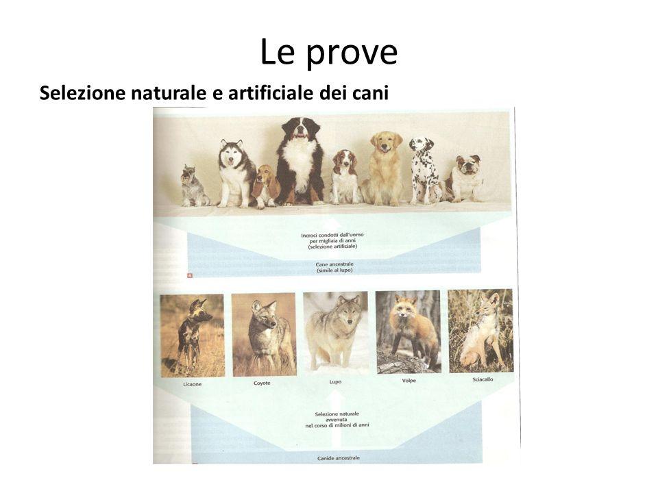 Le prove Selezione naturale e artificiale dei cani