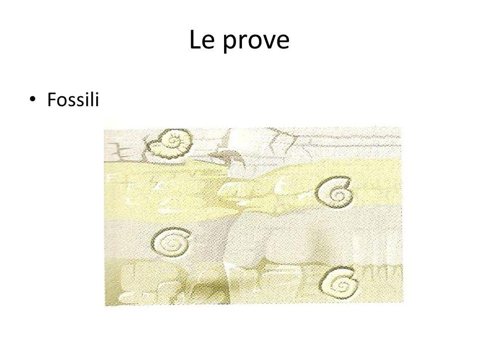 Le prove Fossili