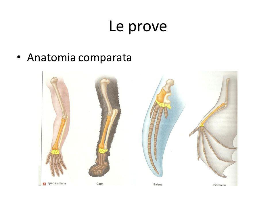 Le prove Anatomia comparata