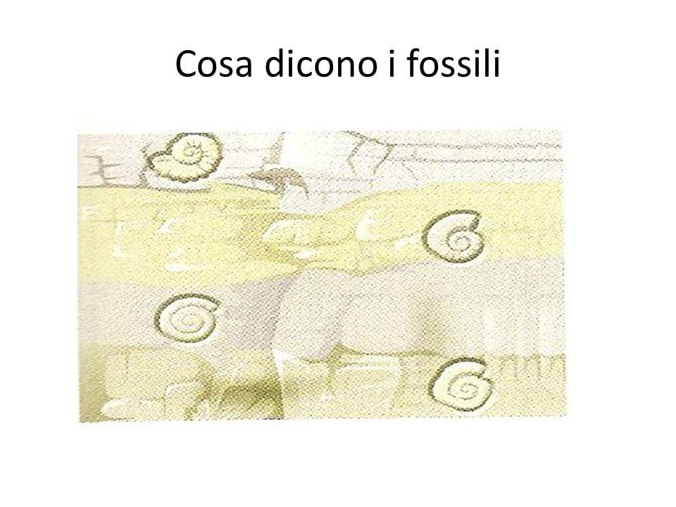 Cosa dicono i fossili