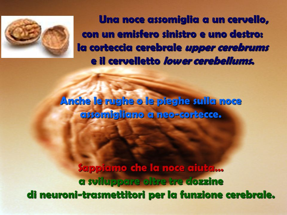 Una noce assomiglia a un cervello,