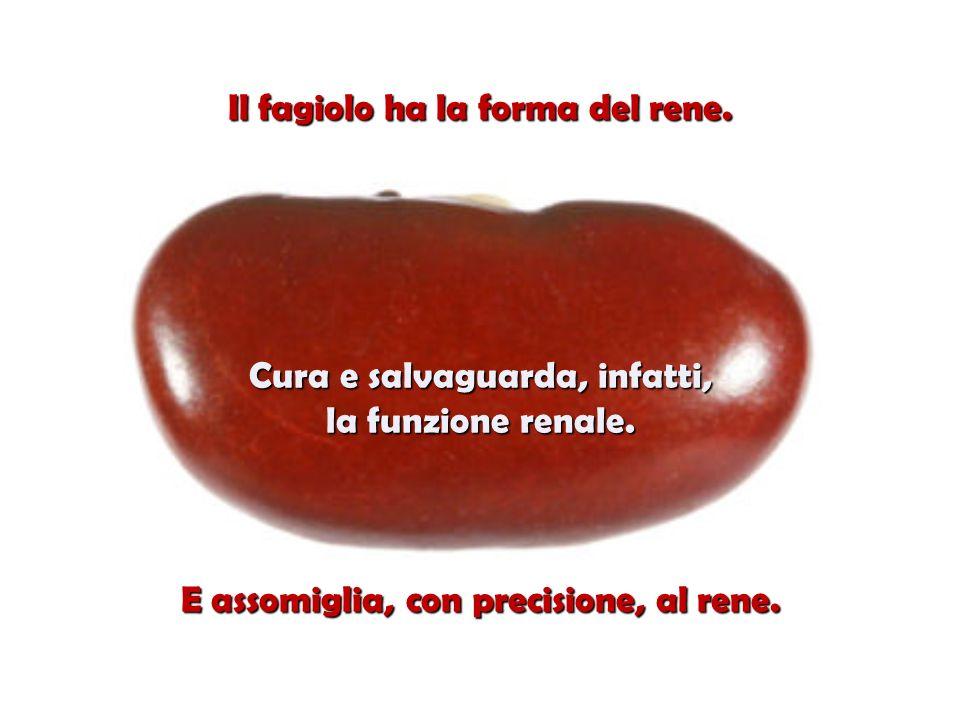 Il fagiolo ha la forma del rene.