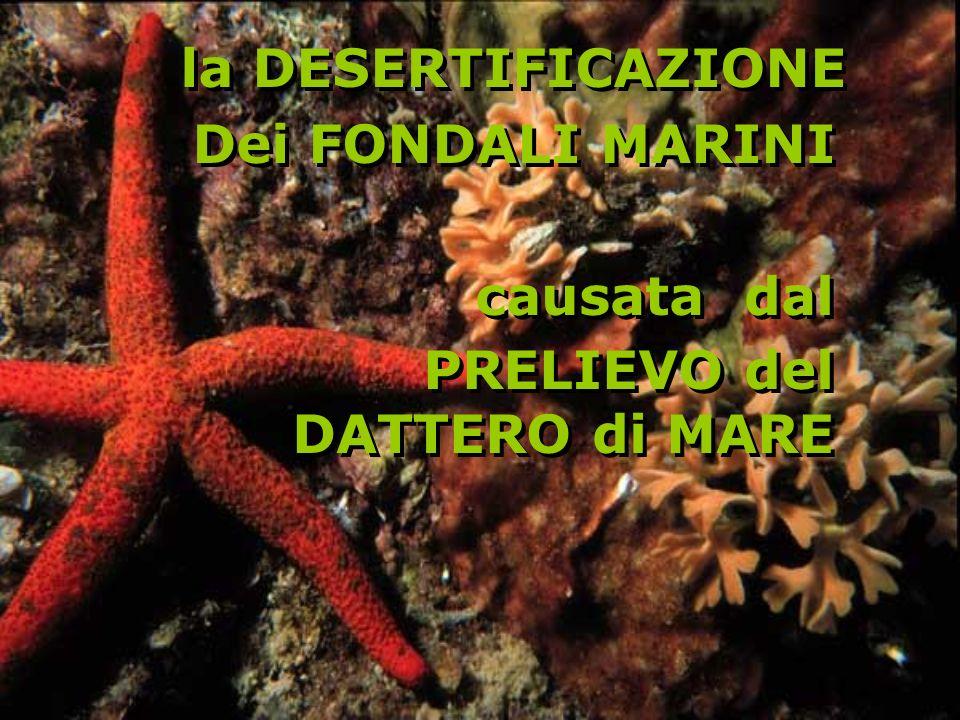 la DESERTIFICAZIONE Dei FONDALI MARINI causata dal PRELIEVO del DATTERO di MARE