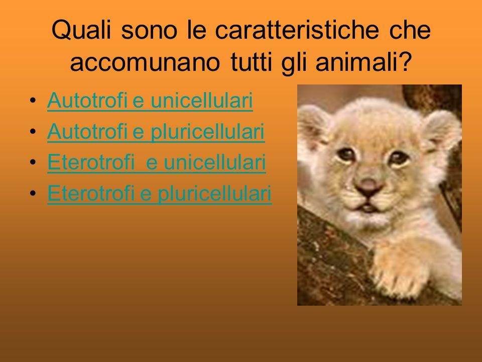 Quali sono le caratteristiche che accomunano tutti gli animali
