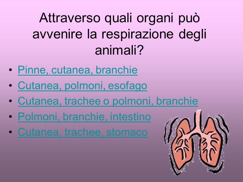 Attraverso quali organi può avvenire la respirazione degli animali