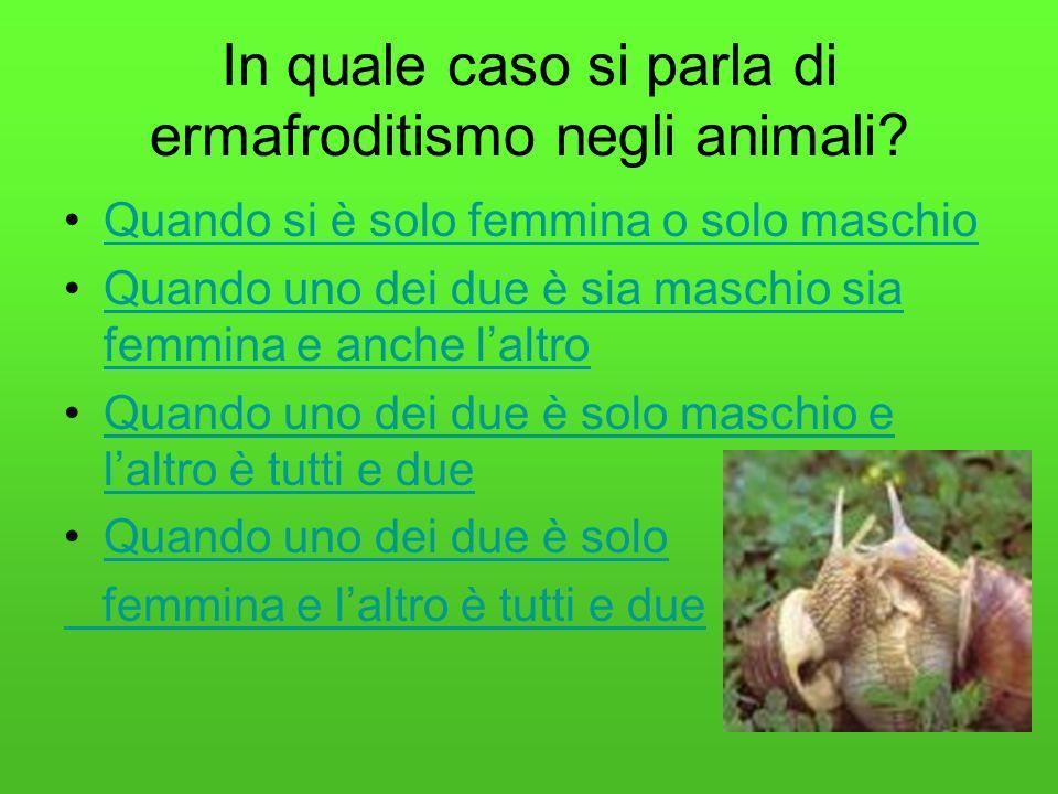 In quale caso si parla di ermafroditismo negli animali
