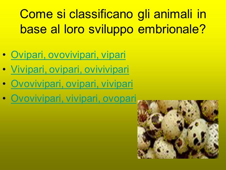 Come si classificano gli animali in base al loro sviluppo embrionale