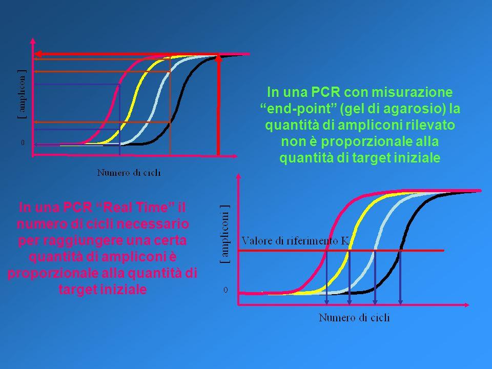In una PCR con misurazione end-point (gel di agarosio) la quantità di ampliconi rilevato non è proporzionale alla quantità di target iniziale