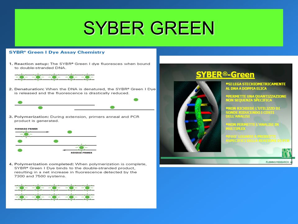 SYBER GREEN