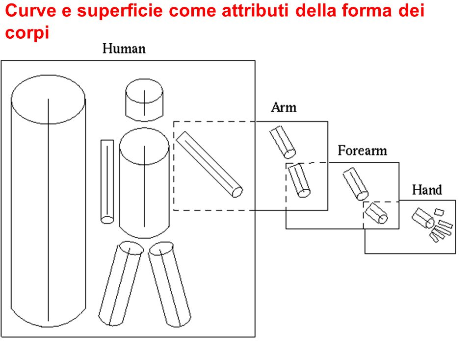Curve e superficie come attributi della forma dei corpi