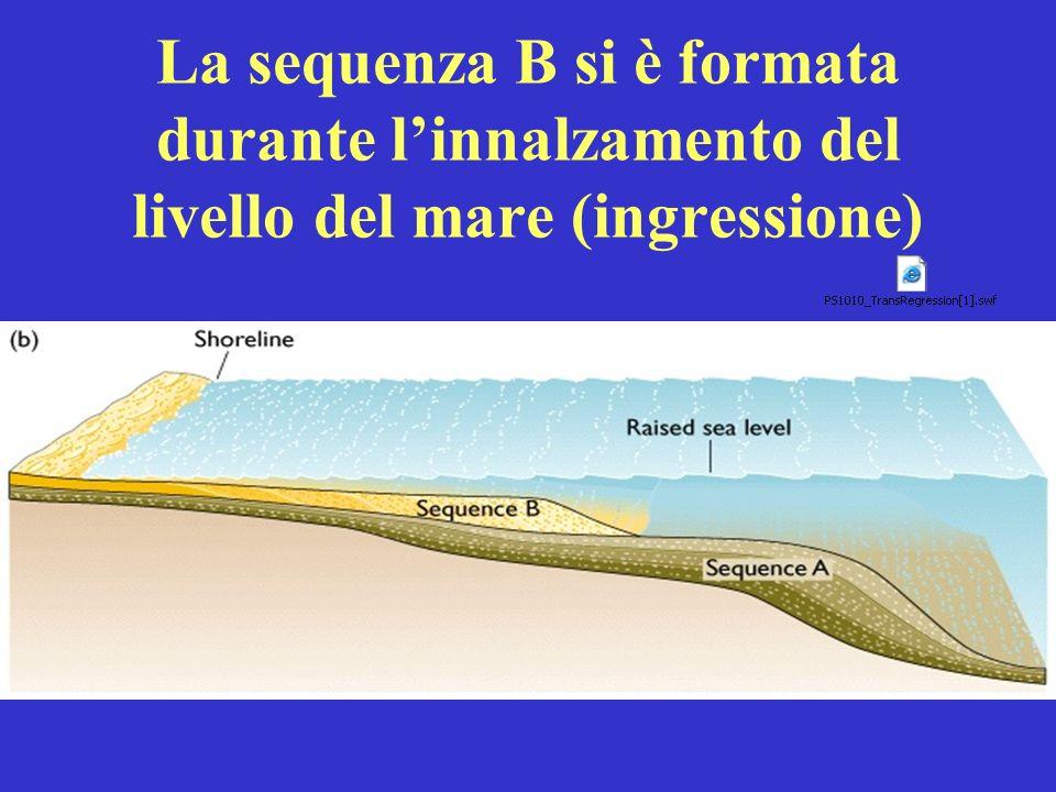 La sequenza B si è formata durante l'innalzamento del livello del mare (ingressione)