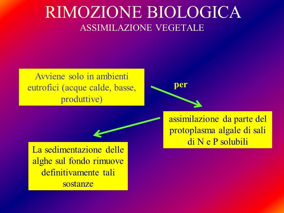 RIMOZIONE BIOLOGICA ASSIMILAZIONE VEGETALE
