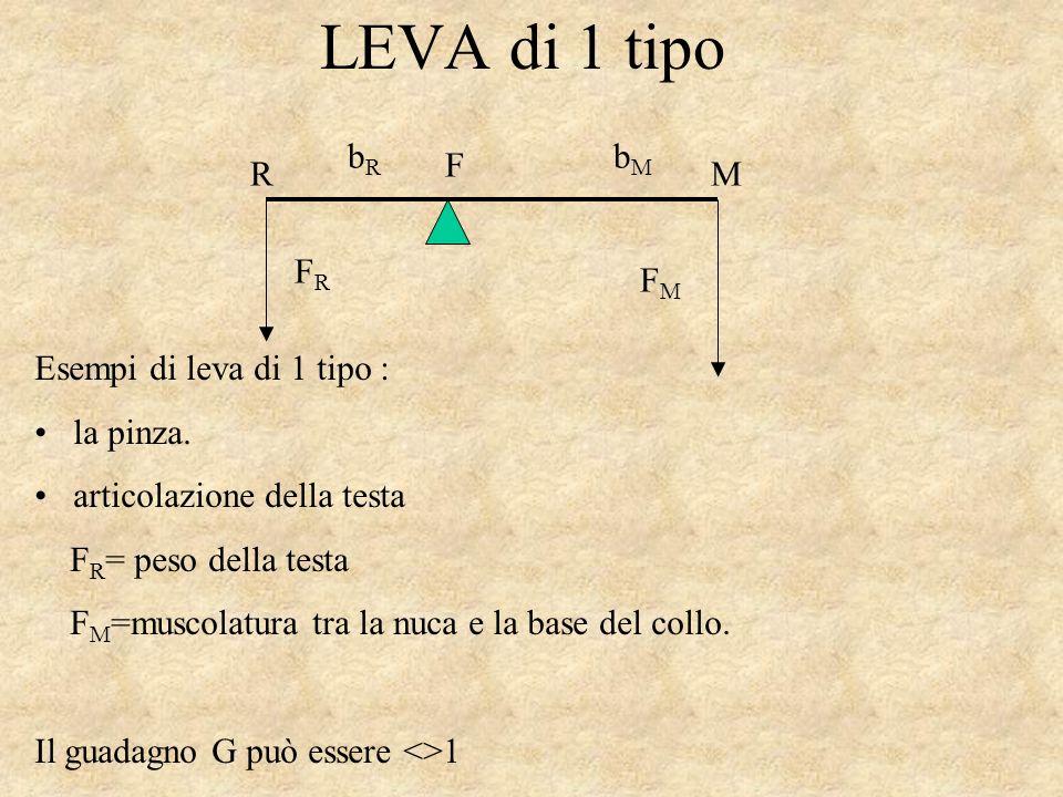 LEVA di 1 tipo bR bM FR FM F M R Esempi di leva di 1 tipo : la pinza.