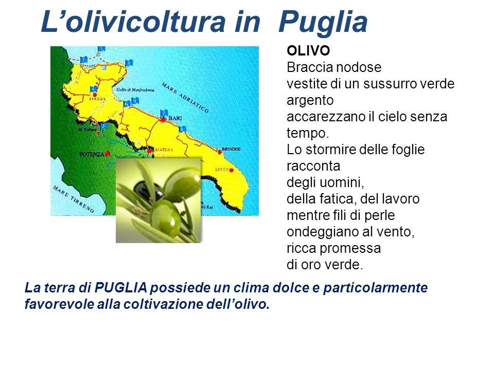 L'olivicoltura in Puglia