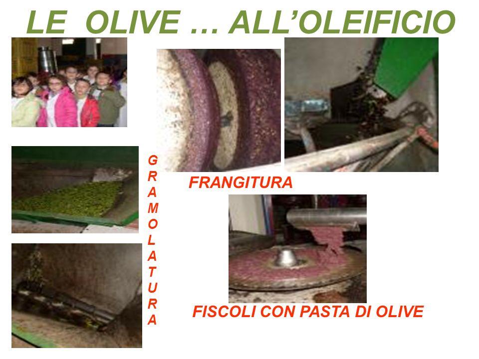 LE OLIVE … ALL'OLEIFICIO