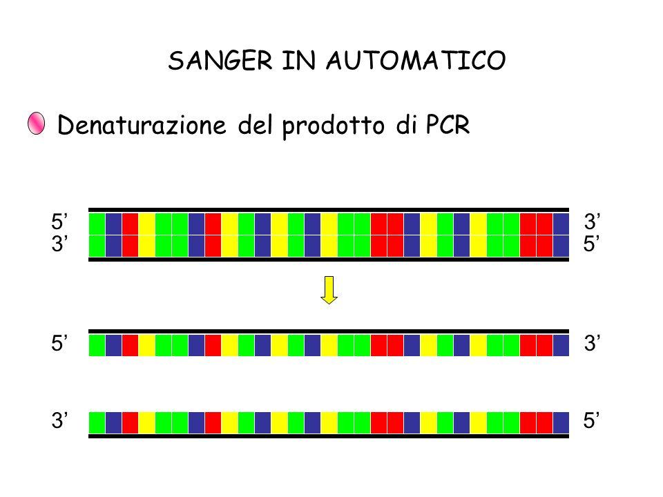 Denaturazione del prodotto di PCR