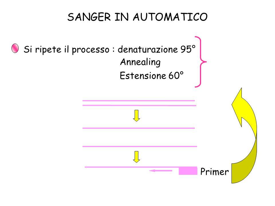SANGER IN AUTOMATICO Si ripete il processo : denaturazione 95°