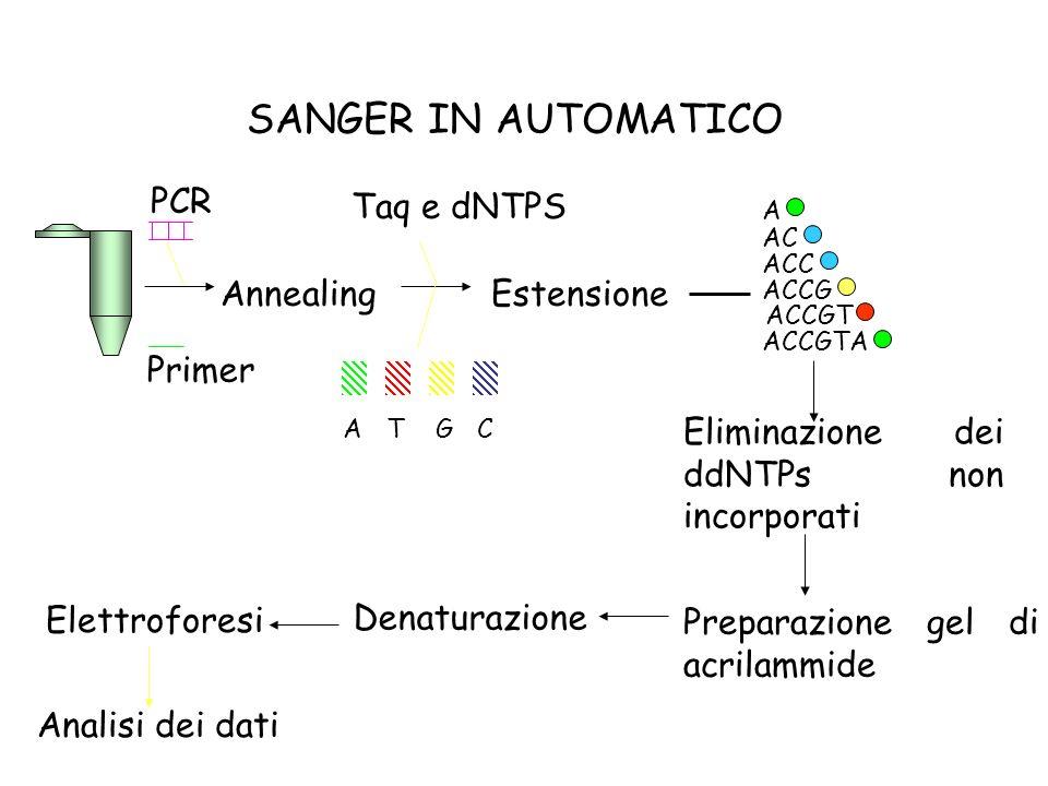 SANGER IN AUTOMATICO PCR Taq e dNTPS Annealing Estensione Primer