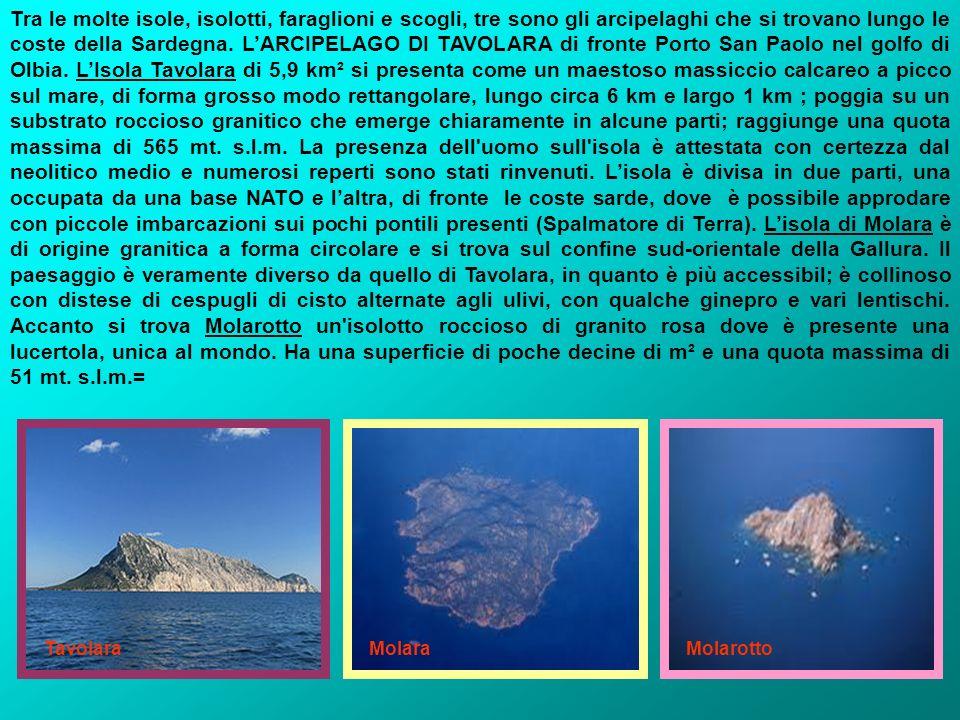 Tra le molte isole, isolotti, faraglioni e scogli, tre sono gli arcipelaghi che si trovano lungo le coste della Sardegna. L'ARCIPELAGO DI TAVOLARA di fronte Porto San Paolo nel golfo di Olbia. L'Isola Tavolara di 5,9 km² si presenta come un maestoso massiccio calcareo a picco sul mare, di forma grosso modo rettangolare, lungo circa 6 km e largo 1 km ; poggia su un substrato roccioso granitico che emerge chiaramente in alcune parti; raggiunge una quota massima di 565 mt. s.l.m. La presenza dell uomo sull isola è attestata con certezza dal neolitico medio e numerosi reperti sono stati rinvenuti. L'isola è divisa in due parti, una occupata da una base NATO e l'altra, di fronte le coste sarde, dove è possibile approdare con piccole imbarcazioni sui pochi pontili presenti (Spalmatore di Terra). L'isola di Molara è di origine granitica a forma circolare e si trova sul confine sud-orientale della Gallura. Il paesaggio è veramente diverso da quello di Tavolara, in quanto è più accessibil; è collinoso con distese di cespugli di cisto alternate agli ulivi, con qualche ginepro e vari lentischi. Accanto si trova Molarotto un isolotto roccioso di granito rosa dove è presente una lucertola, unica al mondo. Ha una superficie di poche decine di m² e una quota massima di 51 mt. s.l.m.=