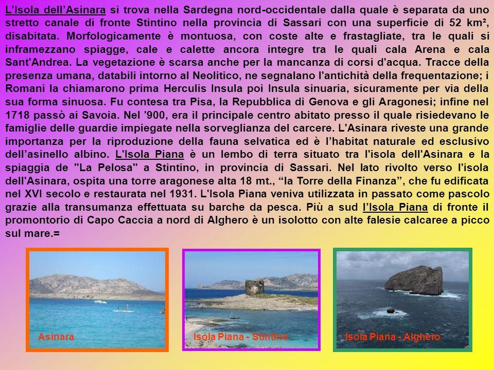L'Isola dell'Asinara si trova nella Sardegna nord-occidentale dalla quale è separata da uno stretto canale di fronte Stintino nella provincia di Sassari con una superficie di 52 km², disabitata. Morfologicamente è montuosa, con coste alte e frastagliate, tra le quali si inframezzano spiagge, cale e calette ancora integre tra le quali cala Arena e cala Sant Andrea. La vegetazione è scarsa anche per la mancanza di corsi d acqua. Tracce della presenza umana, databili intorno al Neolitico, ne segnalano l antichità della frequentazione; i Romani la chiamarono prima Herculis Insula poi Insula sinuaria, sicuramente per via della sua forma sinuosa. Fu contesa tra Pisa, la Repubblica di Genova e gli Aragonesi; infine nel 1718 passò ai Savoia. Nel 900, era il principale centro abitato presso il quale risiedevano le famiglie delle guardie impiegate nella sorveglianza del carcere. L Asinara riveste una grande importanza per la riproduzione della fauna selvatica ed è l'habitat naturale ed esclusivo dell'asinello albino. L Isola Piana è un lembo di terra situato tra l isola dell Asinara e la spiaggia de La Pelosa a Stintino, in provincia di Sassari. Nel lato rivolto verso l isola dell Asinara, ospita una torre aragonese alta 18 mt., la Torre della Finanza , che fu edificata nel XVI secolo e restaurata nel 1931. L Isola Piana veniva utilizzata in passato come pascolo grazie alla transumanza effettuata su barche da pesca. Più a sud l'Isola Piana di fronte il promontorio di Capo Caccia a nord di Alghero è un isolotto con alte falesie calcaree a picco sul mare.=