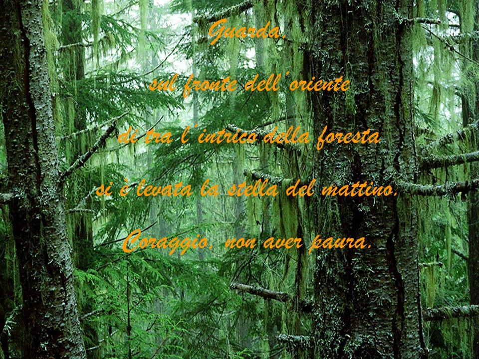 sul fronte dell'oriente di tra l'intrico della foresta