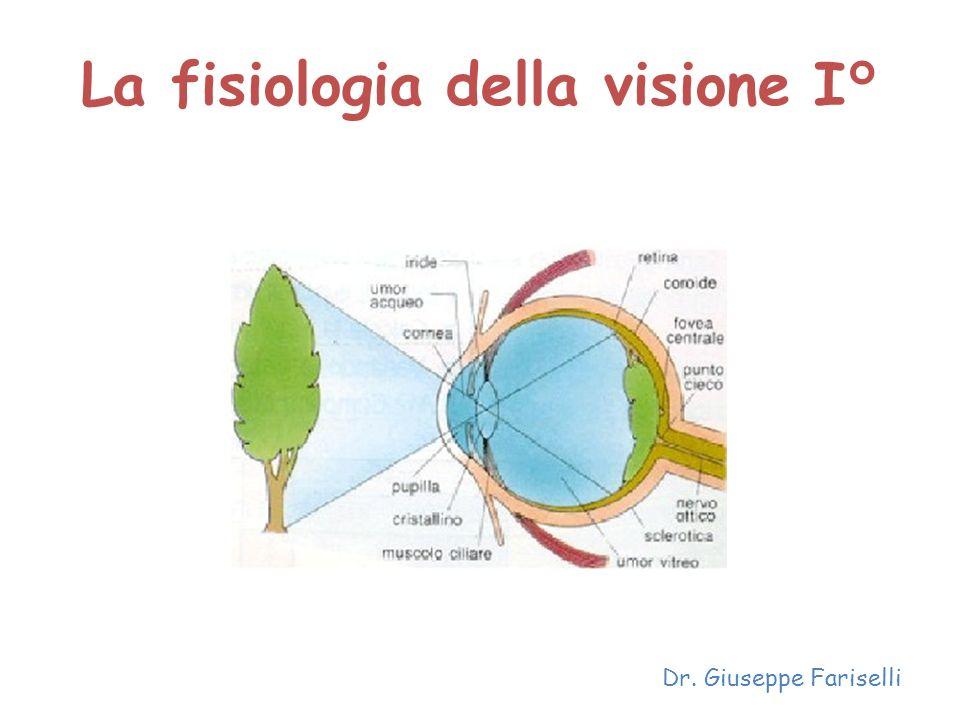 La fisiologia della visione I°