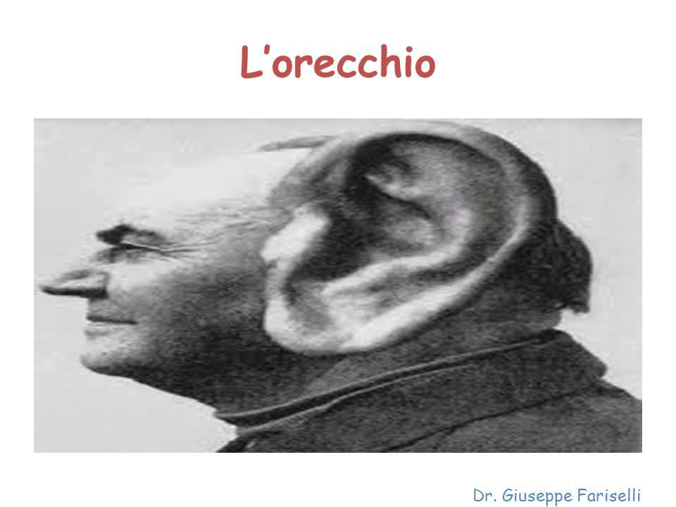 L'orecchio Dr. Giuseppe Fariselli