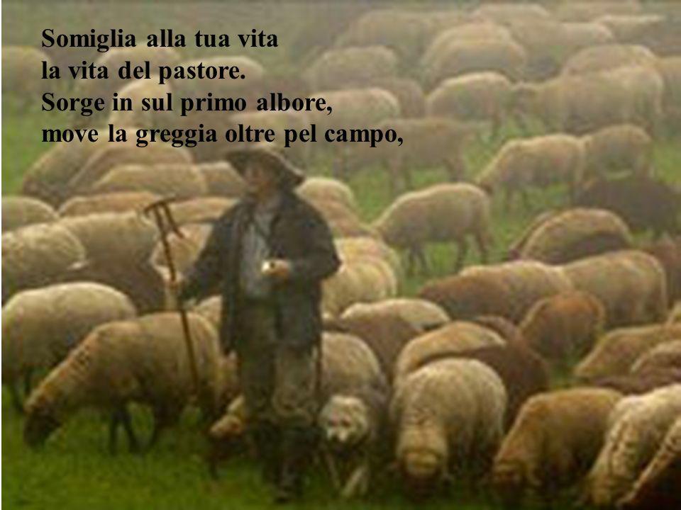 Somiglia alla tua vita la vita del pastore
