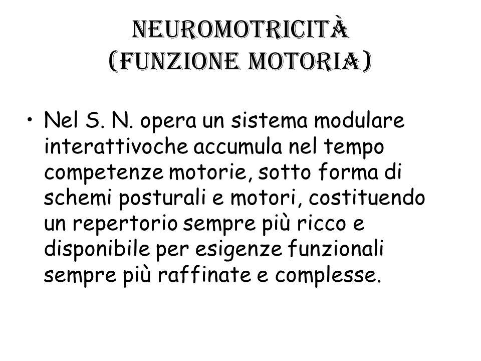 Neuromotricità (funzione motoria)