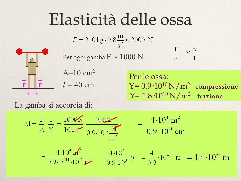 Elasticità delle ossa A=10 cm2 Per le ossa: