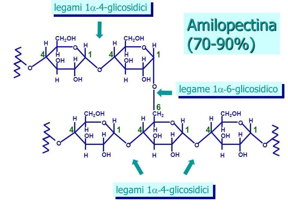 Amilopectina (70-90%) legami 1-4-glicosidici legame 1-6-glicosidico