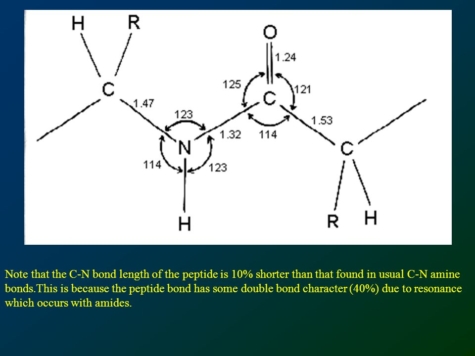 Note that the C-N bond length of the peptide is 10% shorter than that found in usual C-N amine