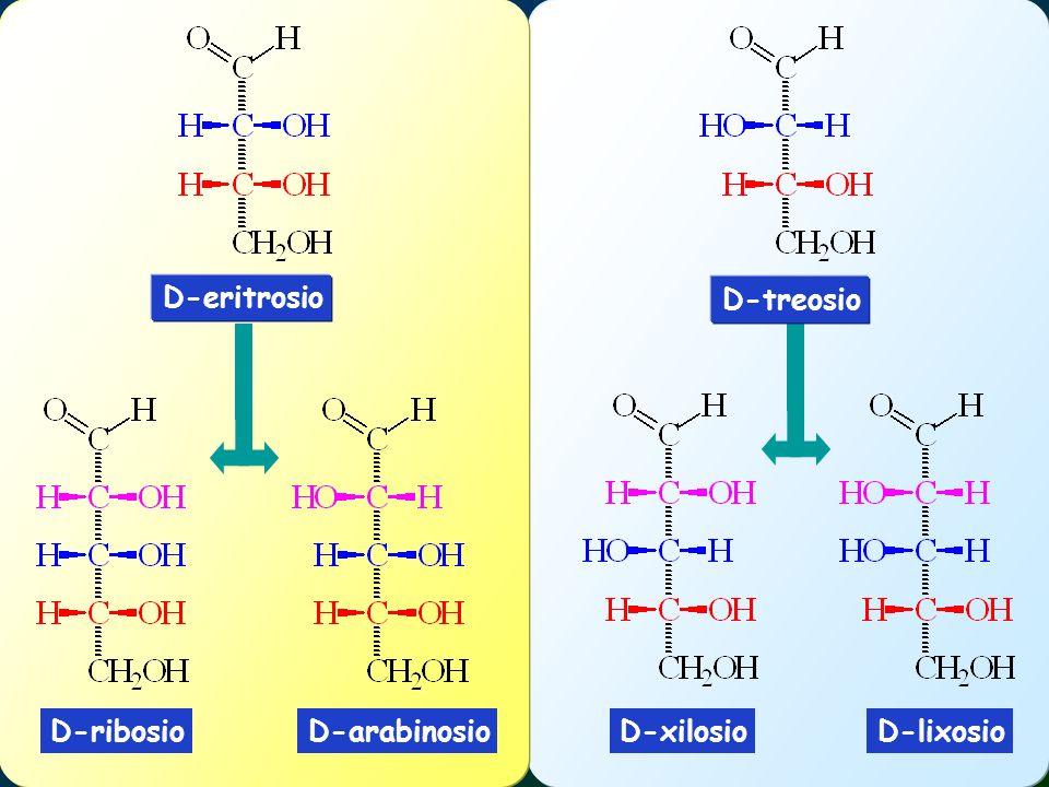 D-eritrosio D-treosio D-ribosio D-arabinosio D-xilosio D-lixosio