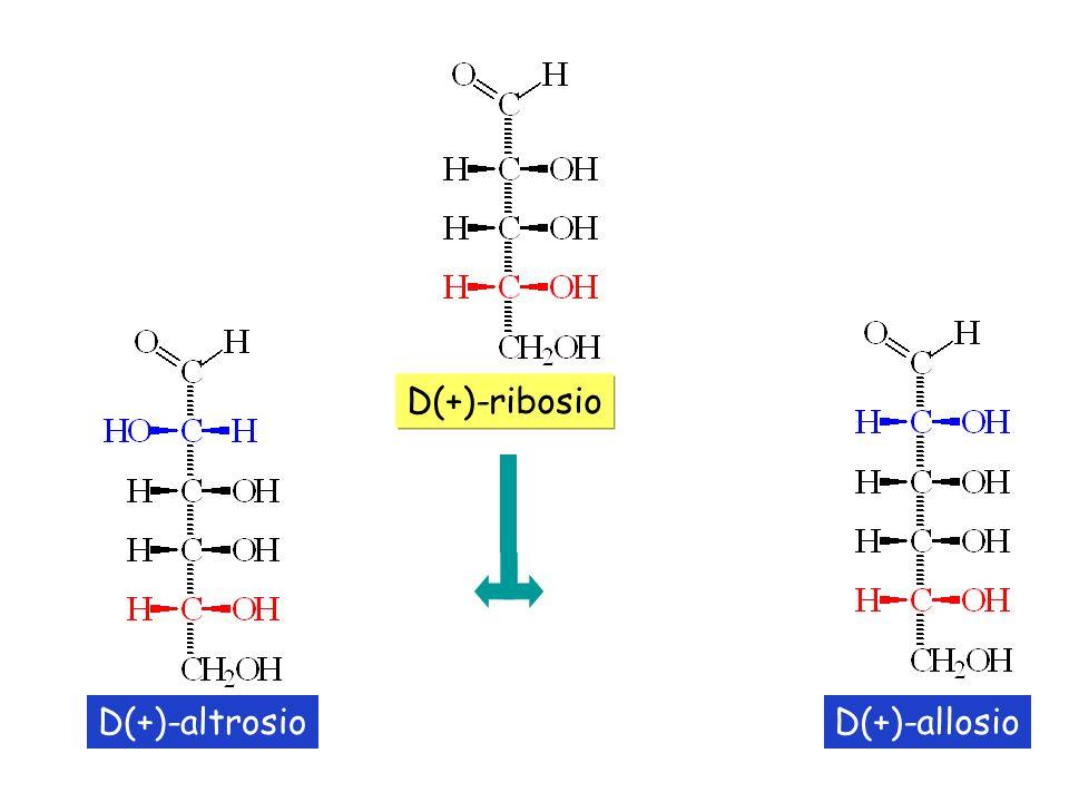 D(+)-ribosio D(+)-altrosio D(+)-allosio