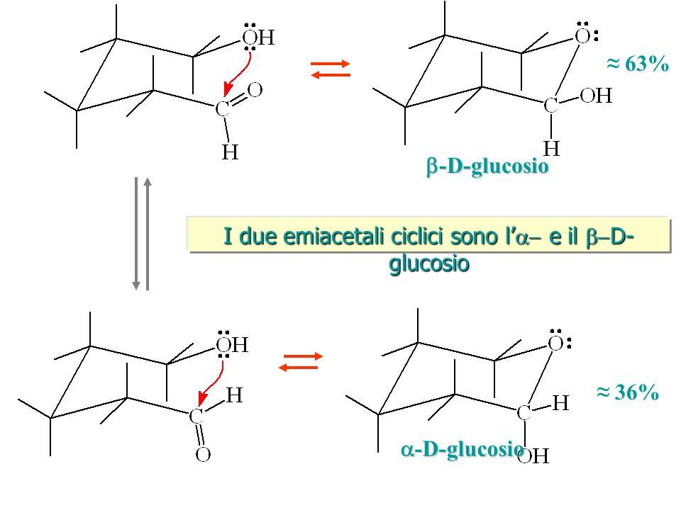 I due emiacetali ciclici sono l'a- e il b-D-glucosio