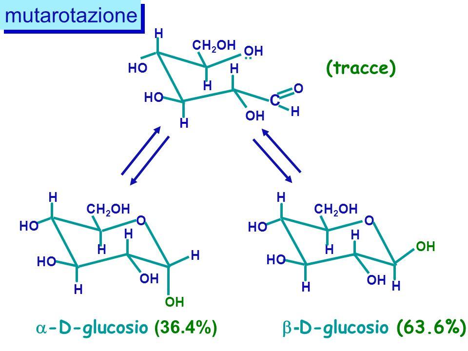 mutarotazione (tracce) -D-glucosio (36.4%) -D-glucosio (63.6%) .. C
