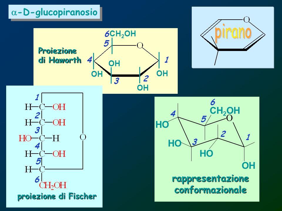 pirano a-D-glucopiranosio CH2OH O HO HO HO OH rappresentazione
