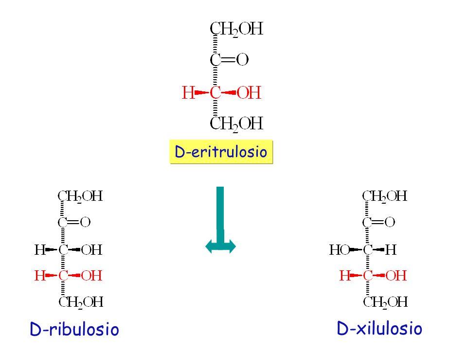 D-eritrulosio D-ribulosio D-xilulosio