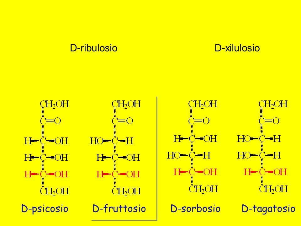 D-ribulosio D-xilulosio D-psicosio D-fruttosio D-sorbosio D-tagatosio