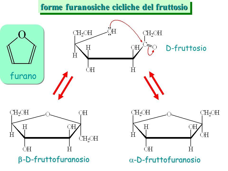 forme furanosiche cicliche del fruttosio