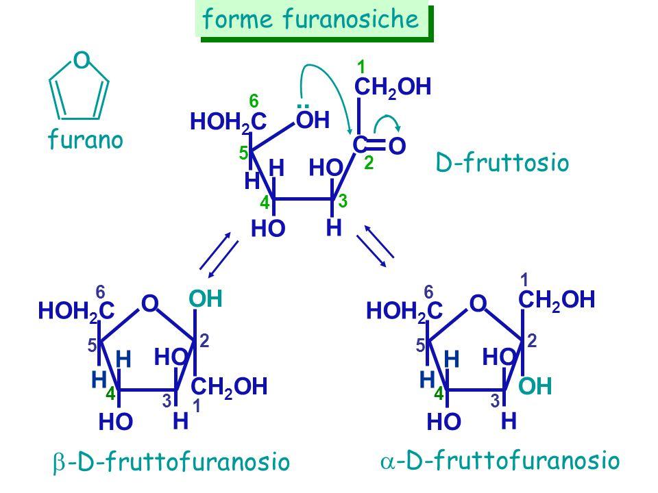 o .. forme furanosiche furano D-fruttosio -D-fruttofuranosio
