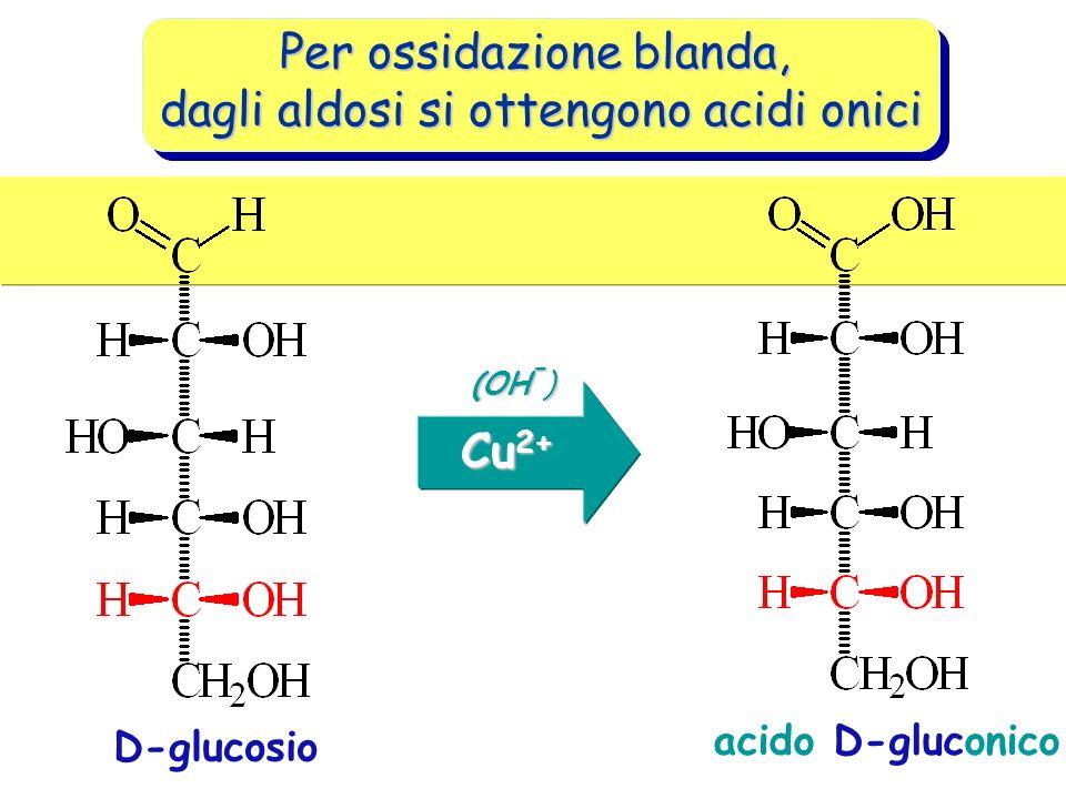 Per ossidazione blanda, dagli aldosi si ottengono acidi onici